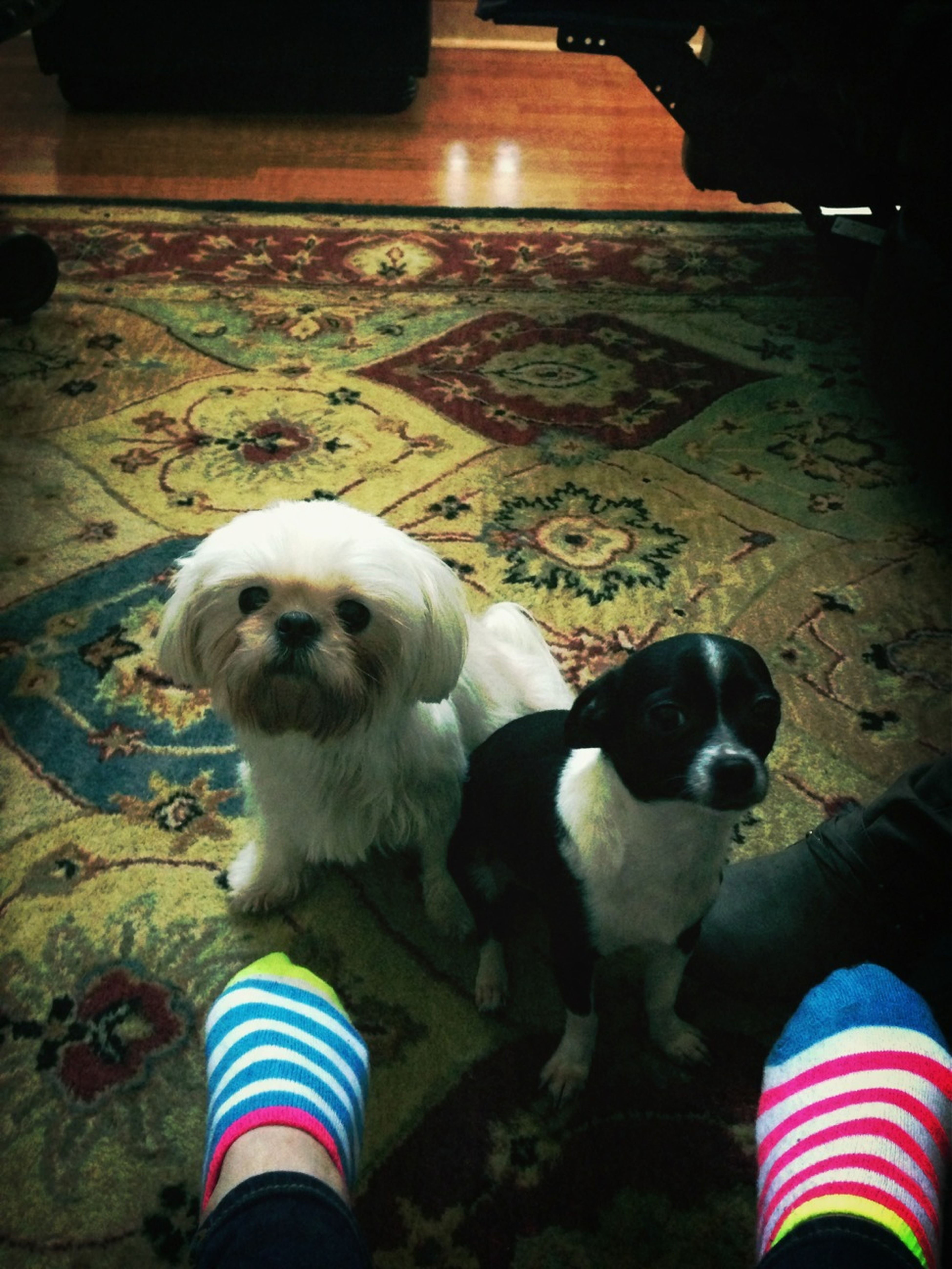 My dogs are the cutest!