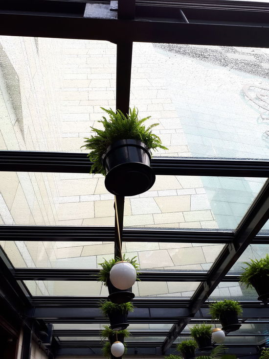 Cieling Low Angle View No People Hanging Day Indoors  Architecture Tree Nature Sky Close-up rainy day interior design Gloomy Day After Rain After The Rains Built Structure Wet Gloomy After The Rain Stopped Art Water