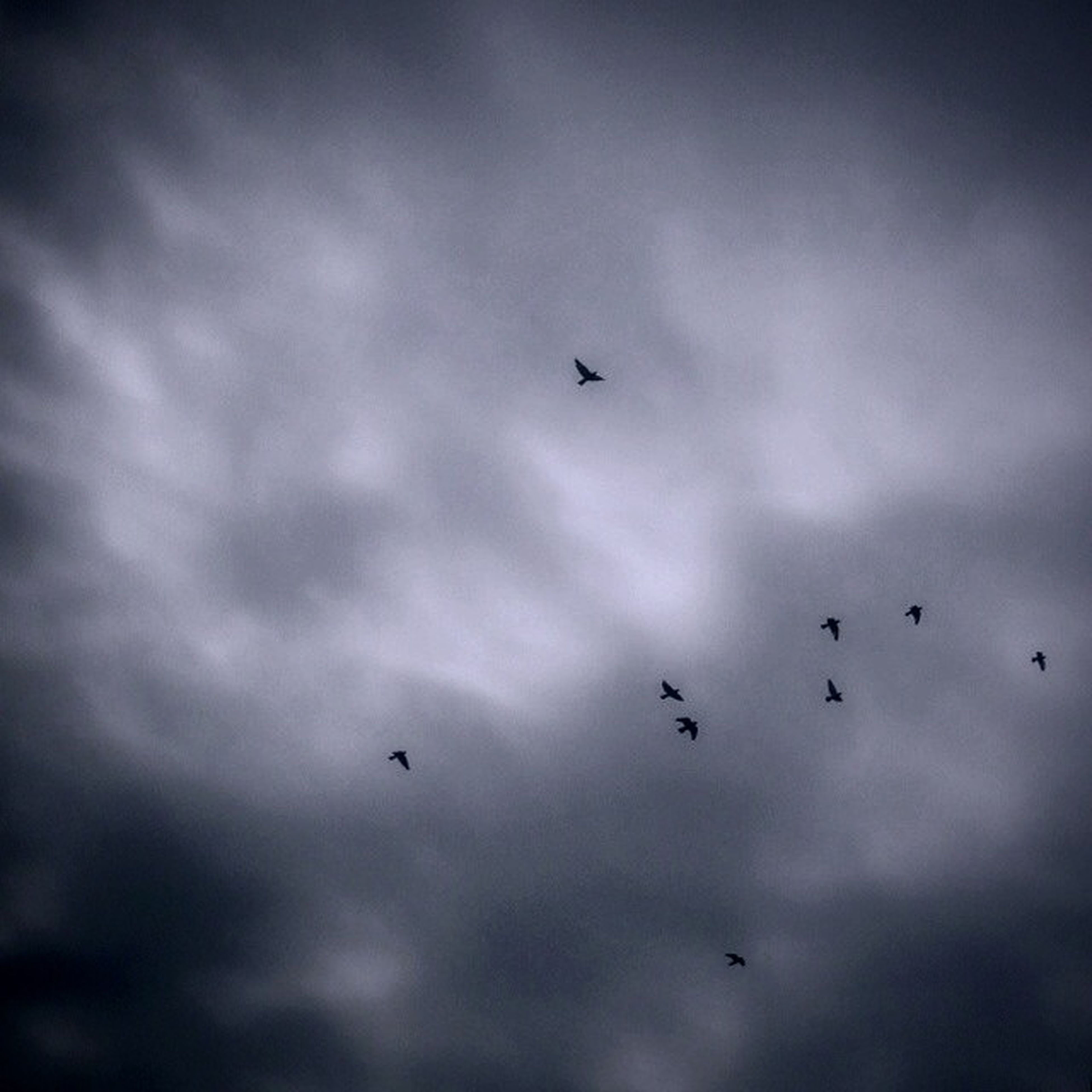 bird, flying, animal themes, animals in the wild, wildlife, sky, low angle view, cloud - sky, cloudy, silhouette, nature, flock of birds, beauty in nature, mid-air, cloud, spread wings, tranquility, scenics, weather