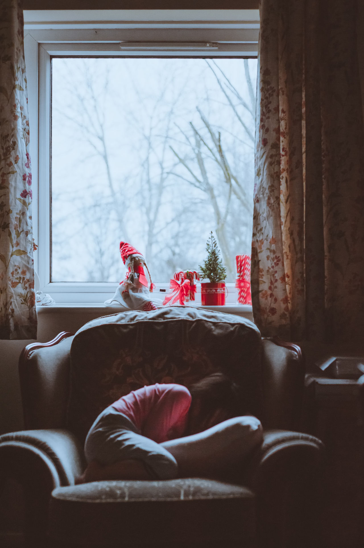 Beautiful stock photos of weihnachten, window, day, flower, no people