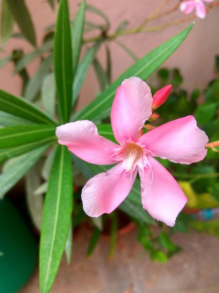 Flower Photography Mi Pic