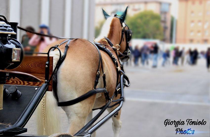 Haflinger, Fiera Cavalli Verona EyeEm Selects Horse Horse Cart Street Animal Themes Focus On Foreground Transportation Day