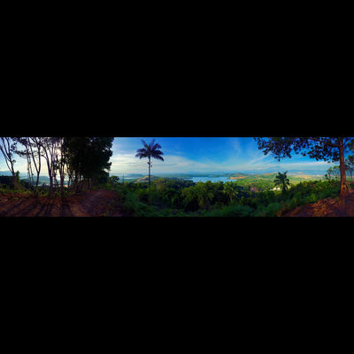 Panorama with my Ip6S..geez.. Animal Themes Animals In The Wild Beauty In Nature Day Fragility Grass Growth Insect Low Angle View Nature No People Outdoors Plant Scenics Silhouette Sky Tree Water