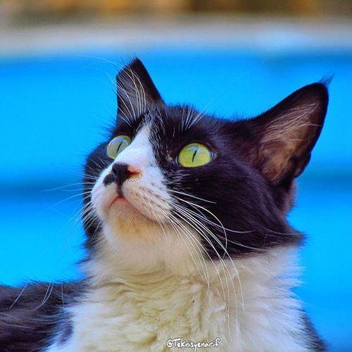 Kediler için nankör derler ama aslında en sadık dostlarımızdır asla arkamızdan kuyumuzu kazmazlar Her zaman omuzunda ağlayabileceğiniz gerçek dostlarınızın olması dileğiyle selamlar Cat Kedi Kas Nankör Sevimli Gerçek Dost