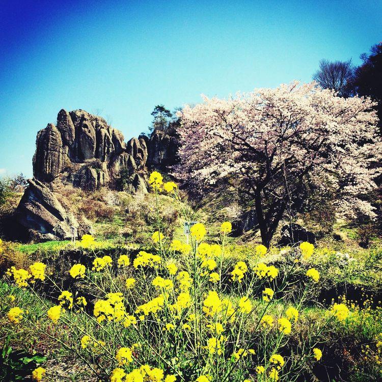Japan 栃木県 チイキカチ Underground 宇都宮 Utsunomiya Tochigi OHYA 大谷石 Ohyaunderground 大谷採石場 地底