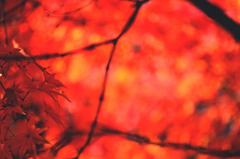 glow of late autumn leaves Eyeemnaturelover Keicomoment Naturelover