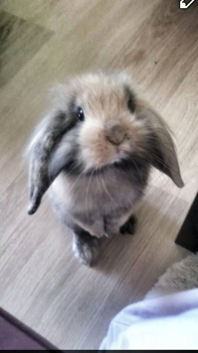 My Kevin <3 BabyPet Bunny