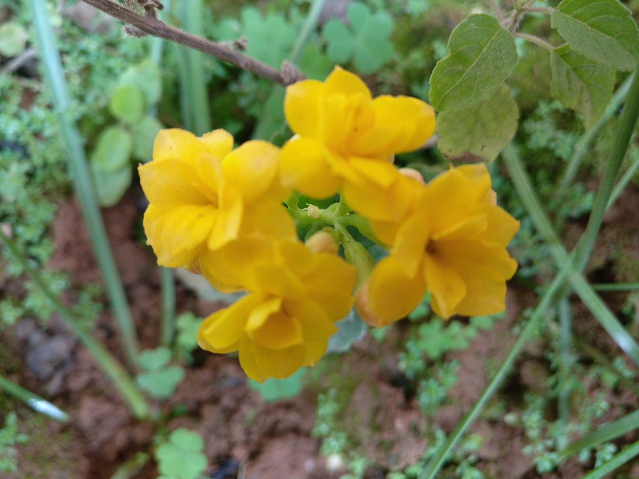 yellow, flower, growth, plant, nature, beauty in nature, fragility, outdoors, no people, freshness, petal, day, blooming, close-up, flower head