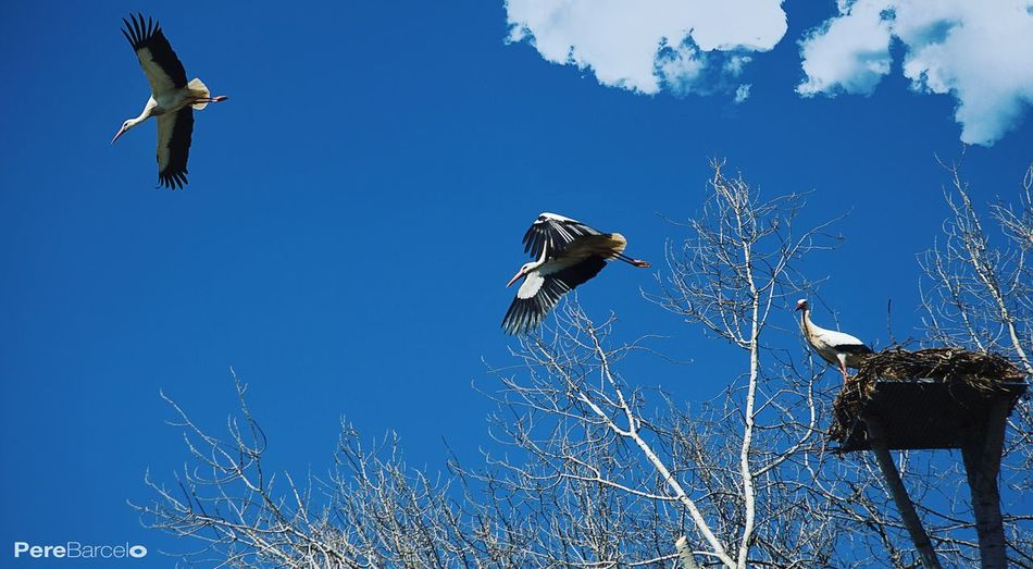 Streetphotography Cigüeñas Bird Photography Lleida Nature Photography Vuelo