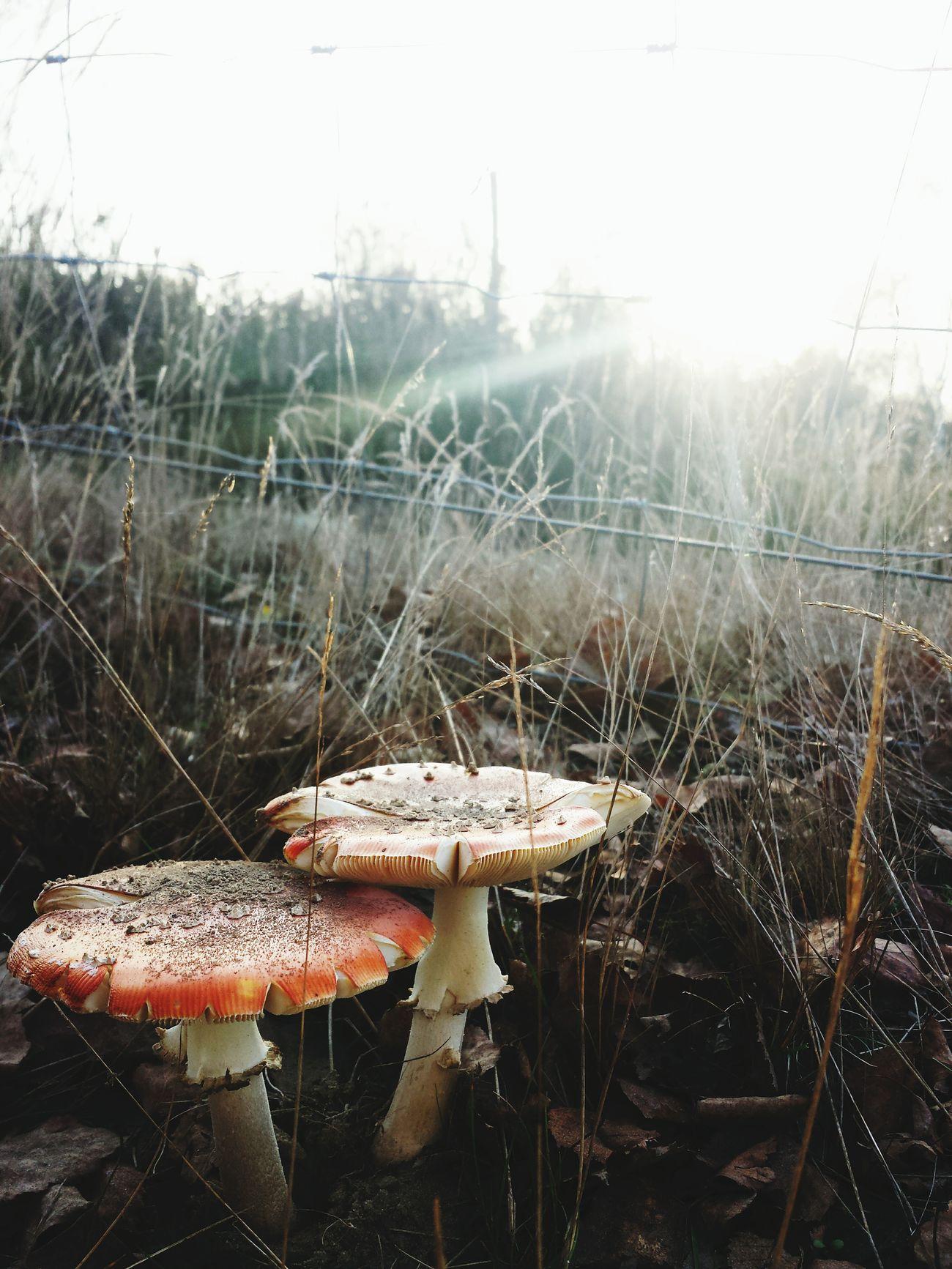 Döberitzer Heide Pilze Mushrooms