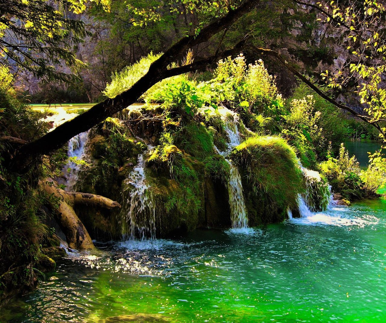 water, tree, beauty in nature, nature, flowing water, scenics, river, waterfall, waterfront, motion, tranquil scene, no people, outdoors, day, growth, tranquility, rock - object, green color, forest, branch, freshness