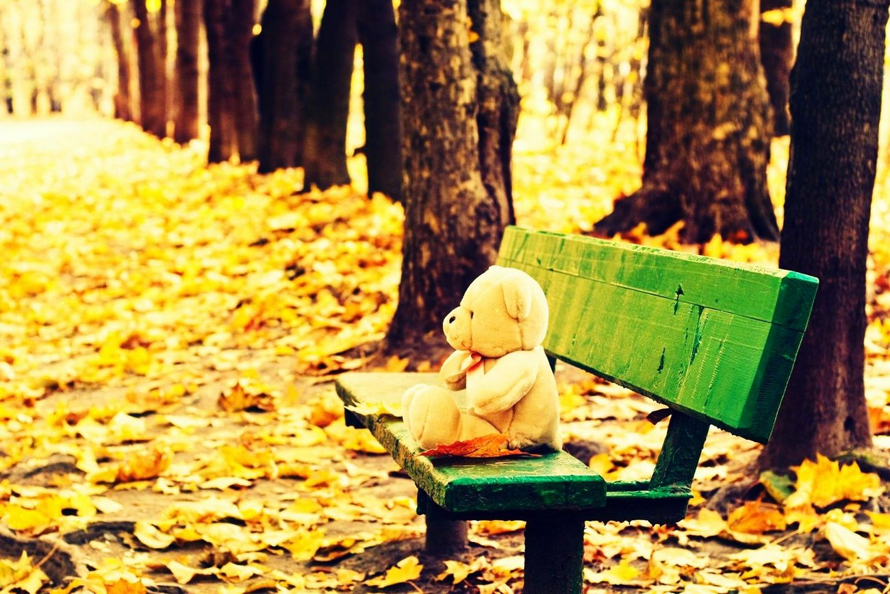 Autumn Alone But Not Lonely Missingsomeone