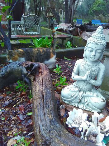 Wood Art Lotus Flowers Stones N Rocks Plant Photography Leaves🌿 Plants 🌱 Animal Photography Zen Kitty Cat Pet Photography  Garden Sculpture  Meditation Garden Garden Photography My Photography Zen Garden Garden Statue Branches No Leaves Taking Photos