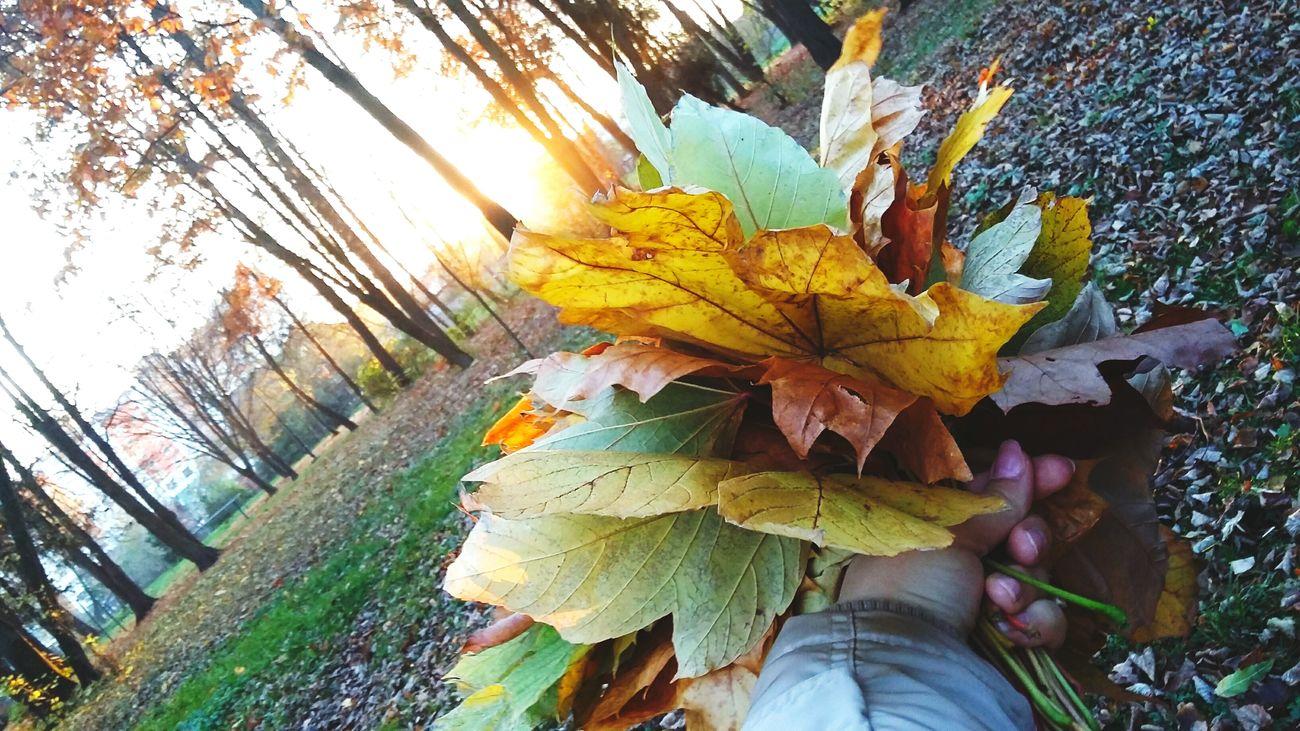 Autumn 🍎☕🌹🍁🍂🍁🍁🍁🍂 Ivano-frankivsk Ukraine