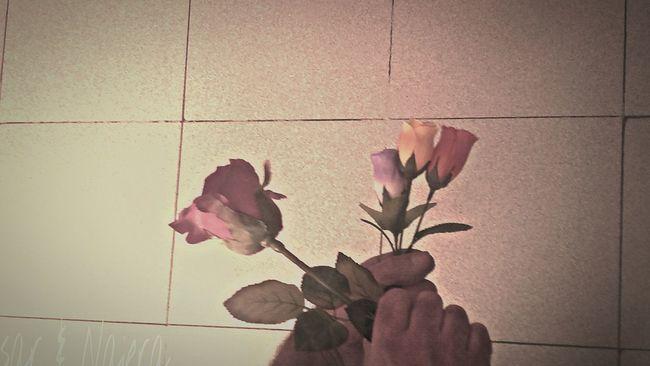 Creative Power Relaxing Eyengallery Pastel Power Cesar & Najera Energy Place The Week Of Eyeem The Great Outdoors - 2015 EyeEm AwardsThe Week On Eyem Vitoria Showcase: February Colorsplash Flowers_collection Movilefotografy Get Inspired Photographic Memory Hello World Donostia / San Sebastián My Color And Pensamient Fotomobile