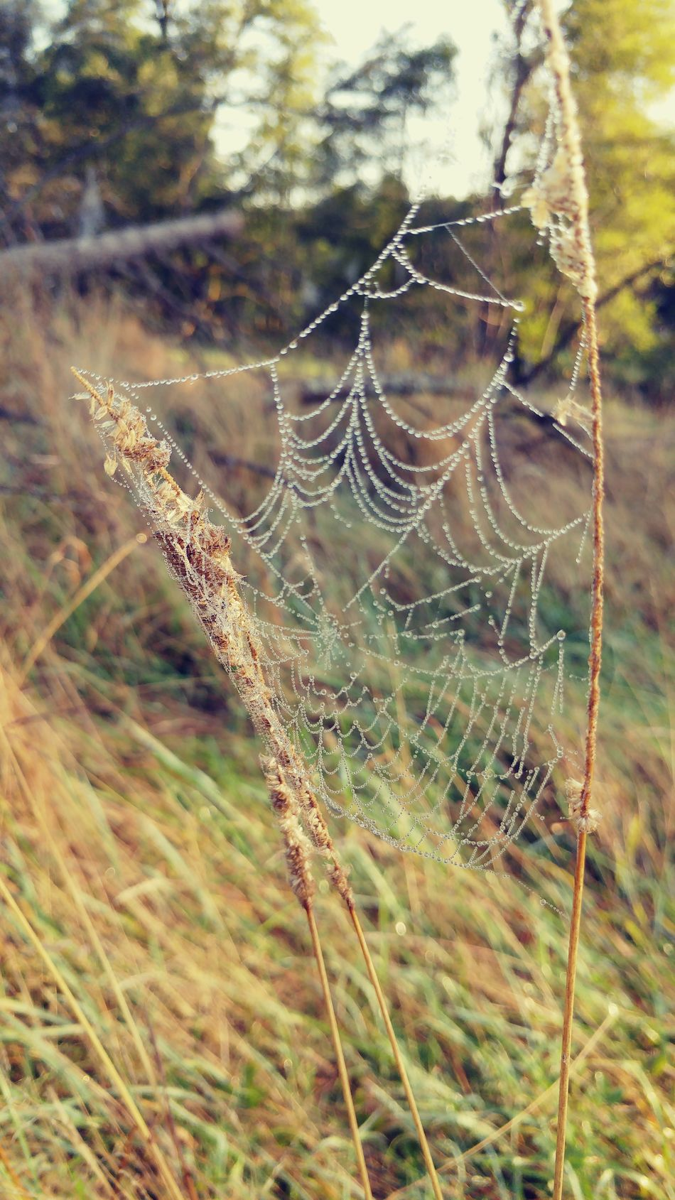 Grass Trawa Spiderweb Spiders Web Spider Web Smartphone Photography Smartphonephotography Lgg5photography LG  Lg G5