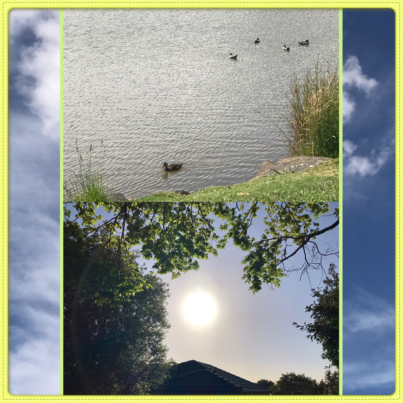 Ducks swimming in the Lake and Sunshine 👌🏼☀️🐤 Ducks Swimming Lake Animals Sunshine Nature MyPhotography Eyeemcollection Cute WhileIwaswalking Collage