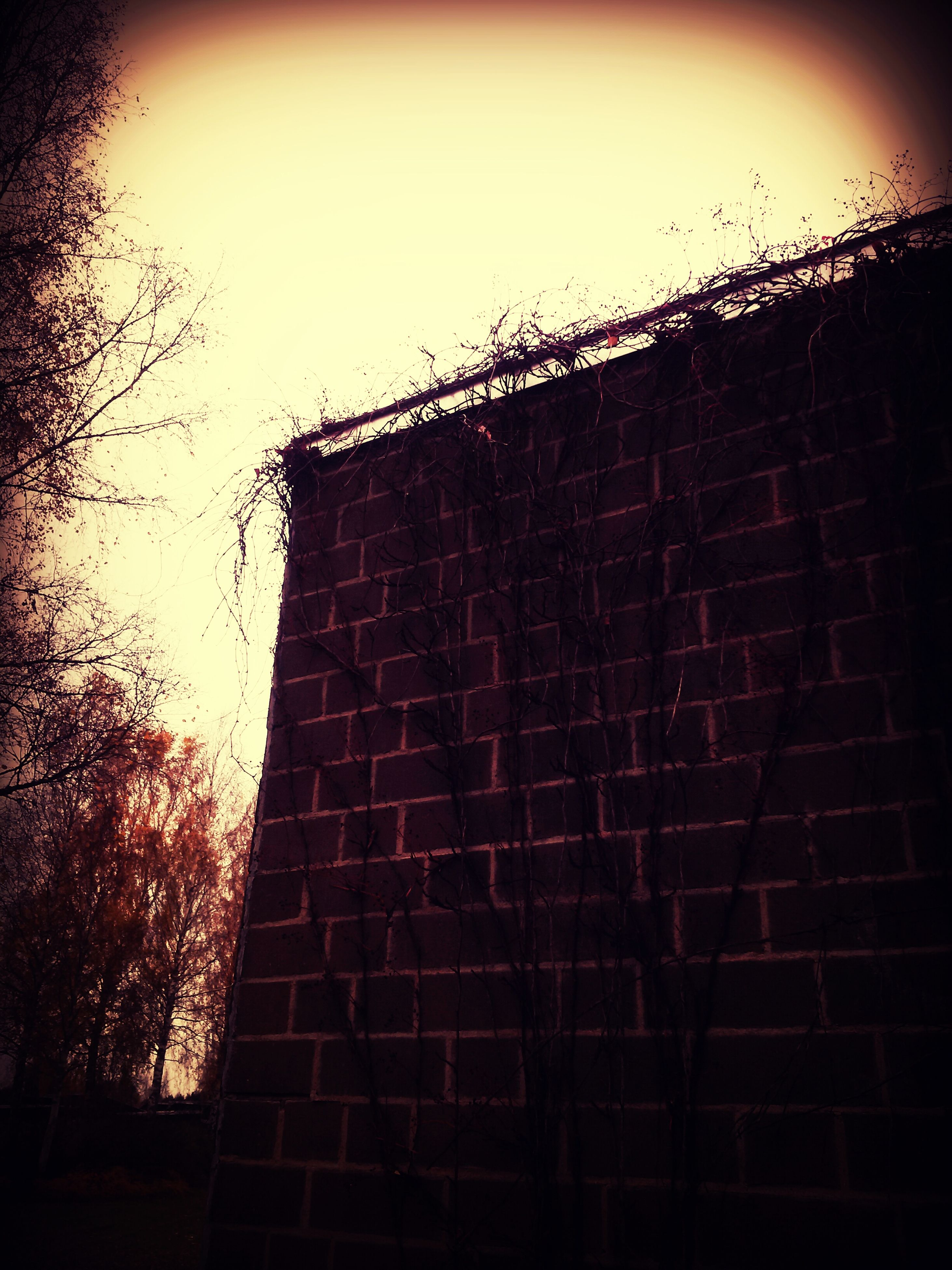 built structure, architecture, low angle view, building exterior, clear sky, silhouette, sky, brick wall, window, night, tree, outdoors, wall - building feature, no people, copy space, building, dusk, house, pattern, dark