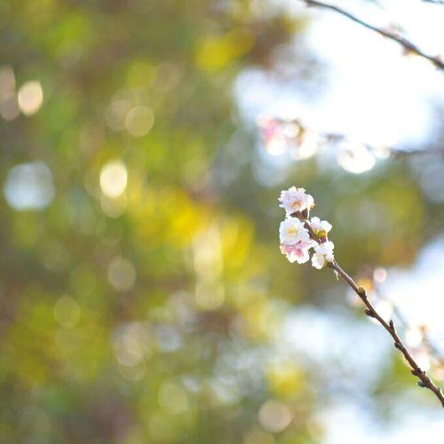 Flowers Sweet Bokeh Photography Nikon Pastelmood Keicomoment