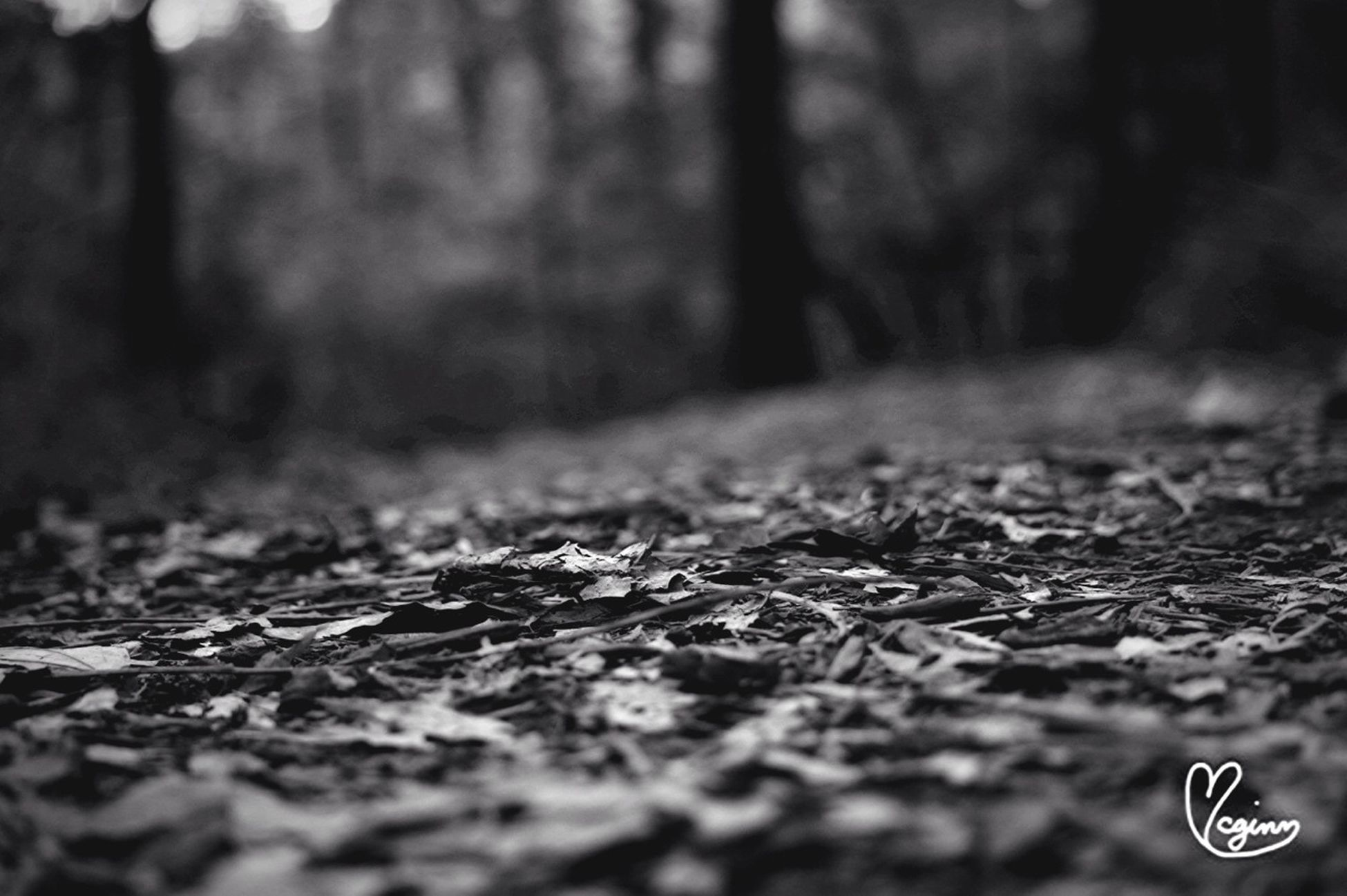 selective focus, surface level, close-up, focus on foreground, leaf, ground, dry, no people, outdoors, nature, fallen, asphalt, street, day, field, grass, road, dirt, textured, falling