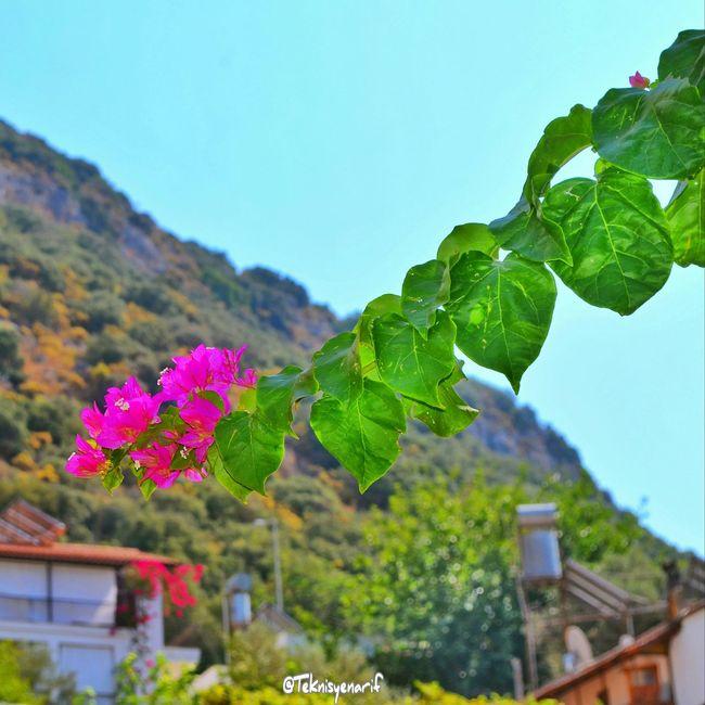 Bu çiçekler tüm sevenlere gelsin Kas Begonvil Flawer🌸 çiçek Sevmek Aşk