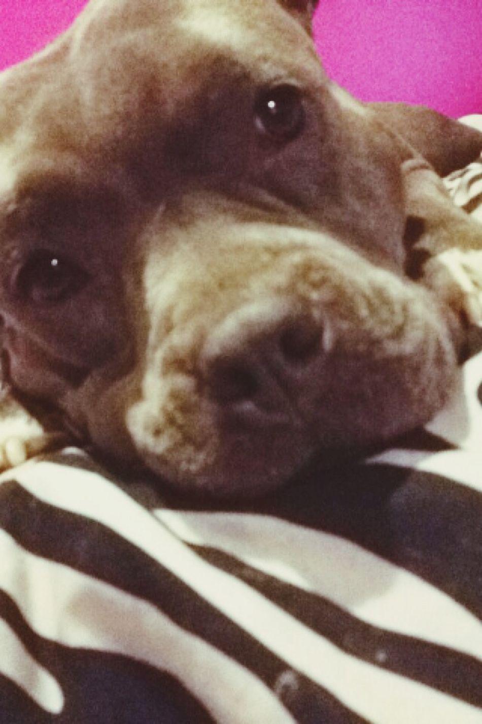 Mya! Dog
