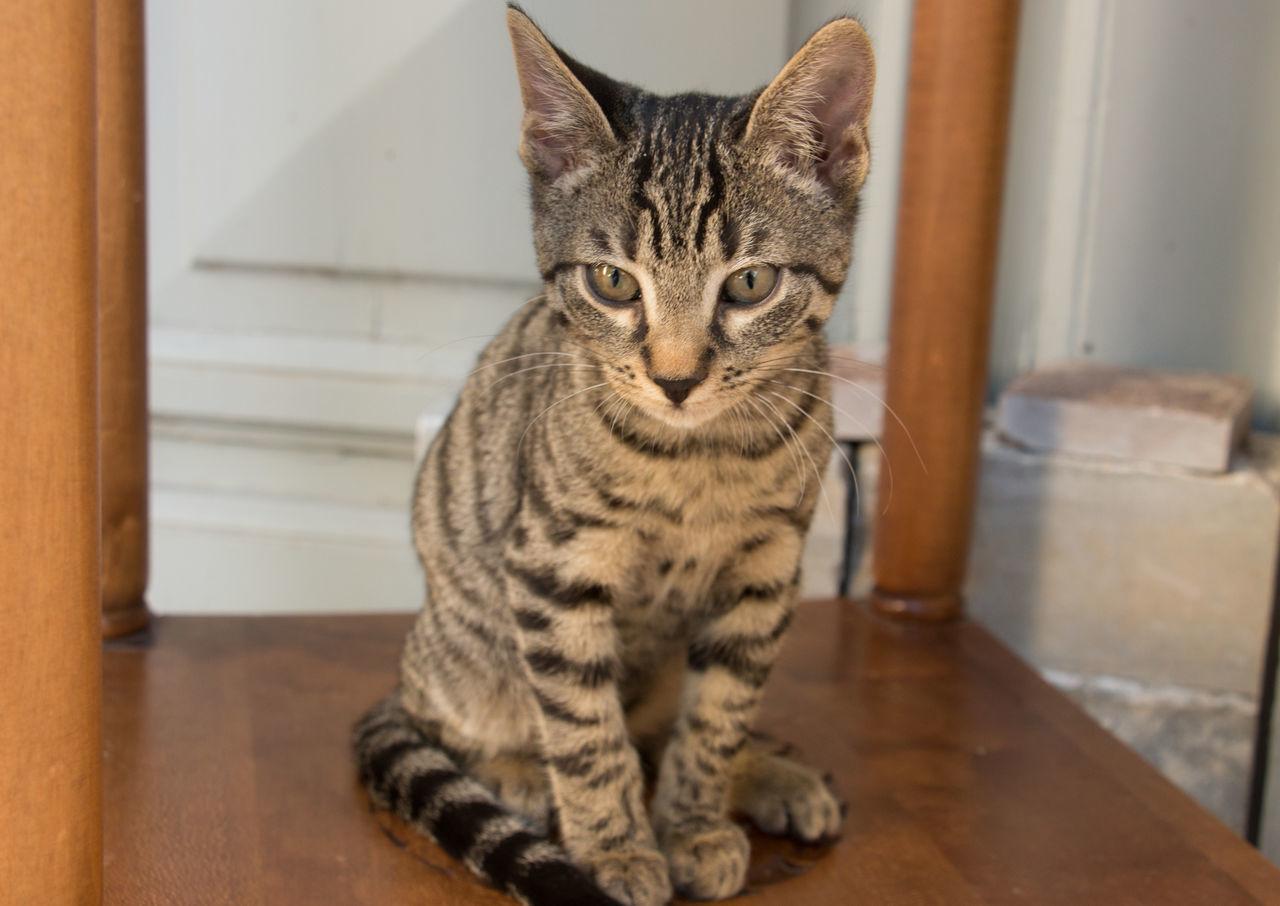 One Animal Whisker Portrait Kittens Beauty Beautiful Cat Cats Of EyeEm Pets Seria Of Greek Cats Greek Cats