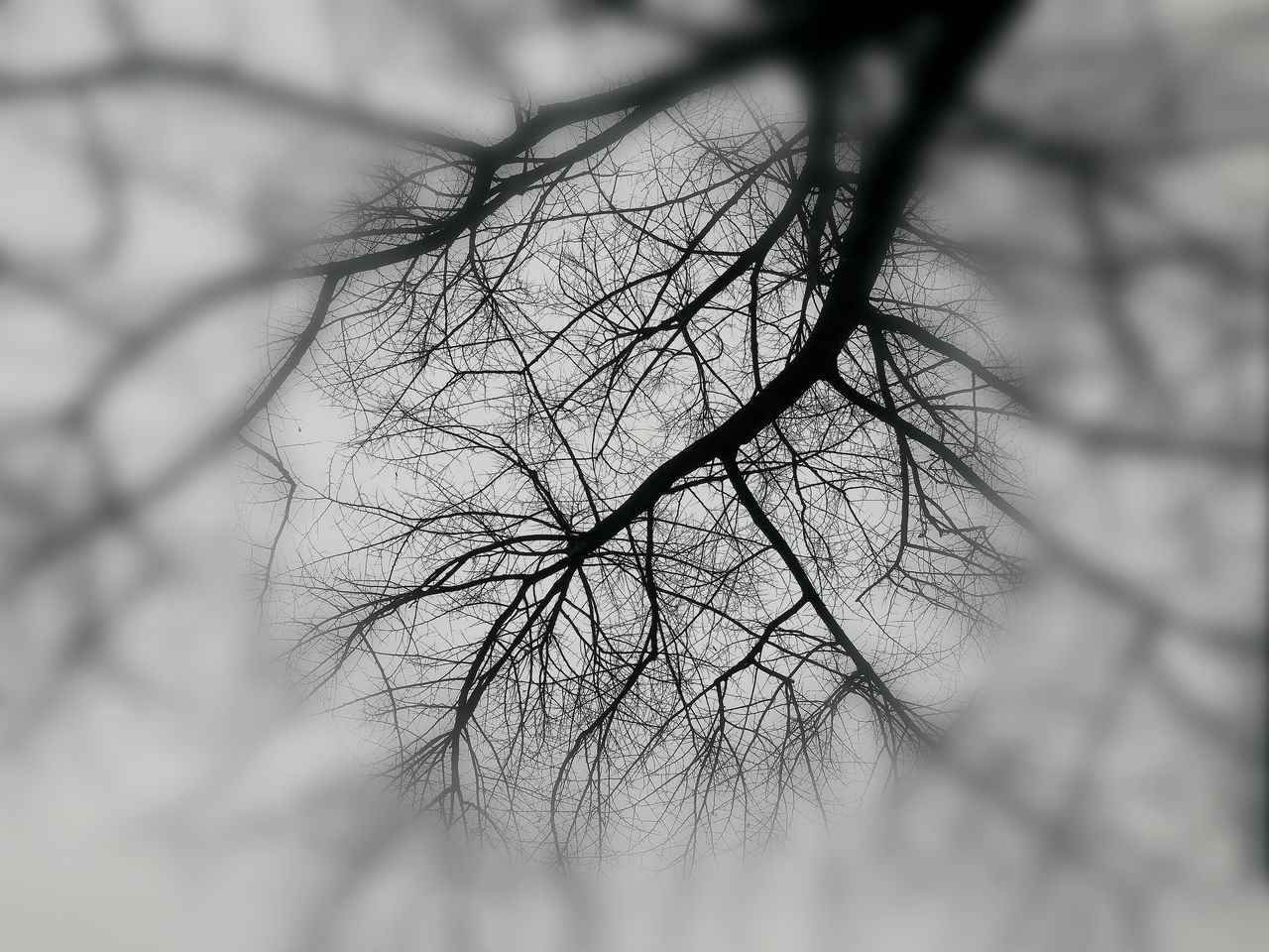 bare tree, selective focus, human body part, close-up, outdoors, human skin, branch, day, nature, beauty in nature, one person, tree, human hand