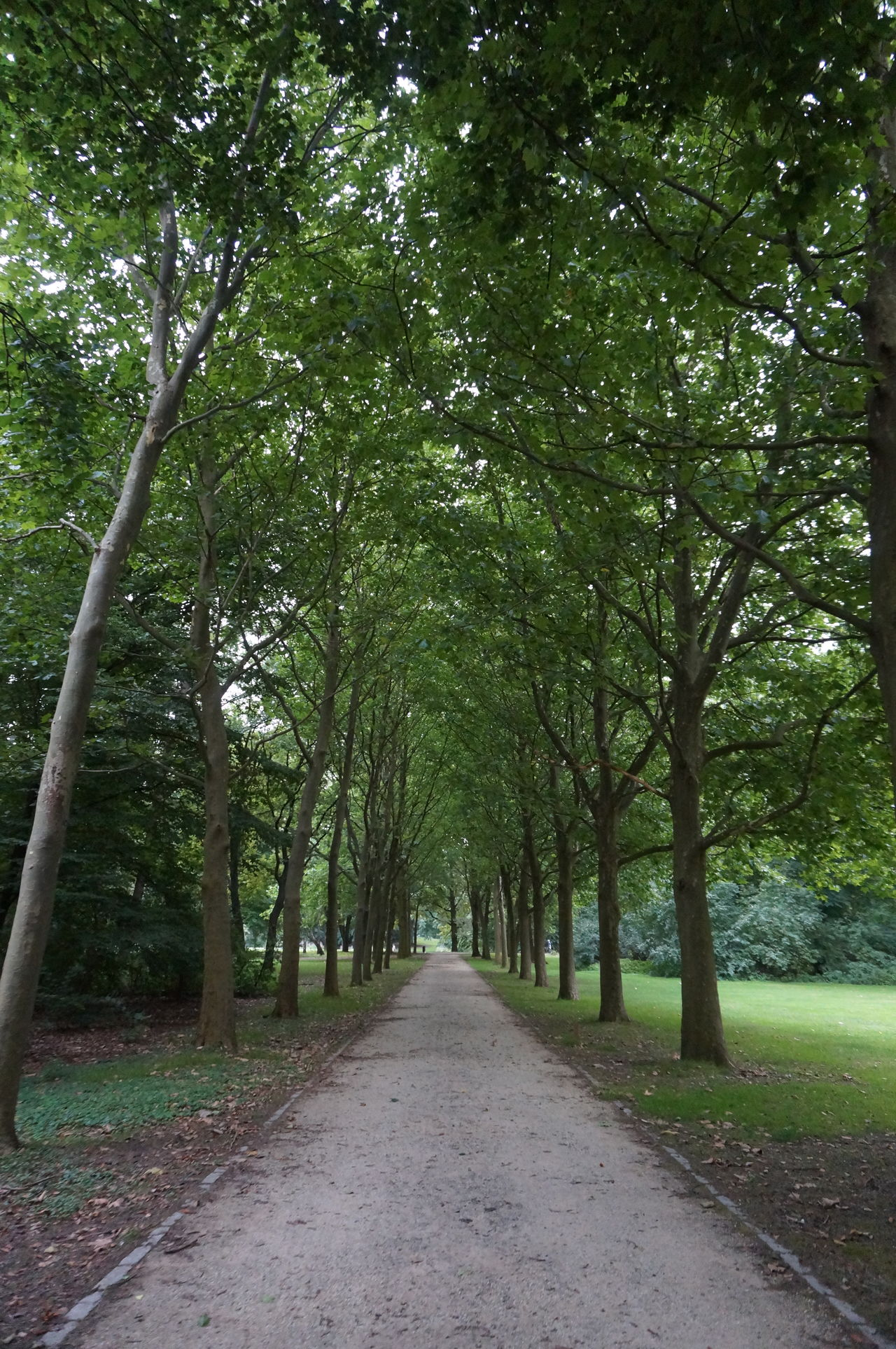 Day Endless Green Nature No People Outdoors Park Promenade Trees Walking Path Way Your Way