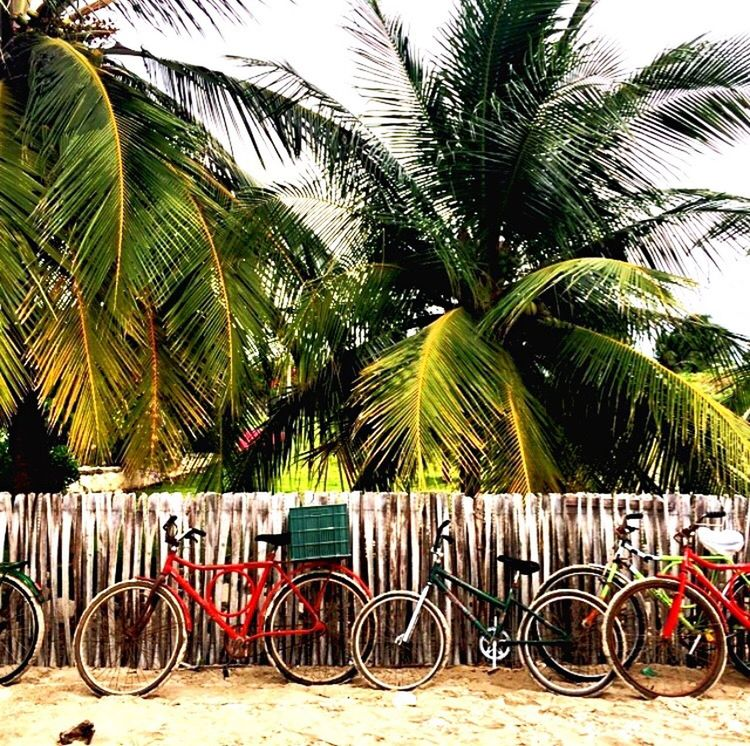 Bicycle Palm Tree Outdoors Transportation Tree Stationary Green Color City No People Bicycle Rack Nature Sky The Great Outdoors - 2017 EyeEm Awards TheBestOfBrazil Sommergefühle