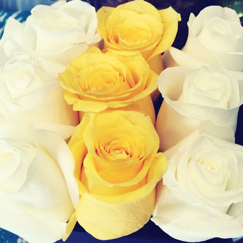 Resist Flower Petal Rose - Flower Fragility Flower Head Freshness Full Frame No People Beauty In Nature Nature Backgrounds Yellow Close-up Indoors  Day