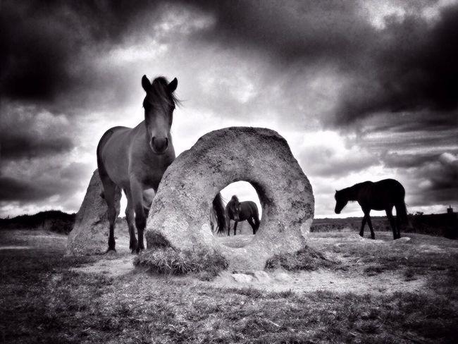 Men an Tol Horses | 2 The Moment - 2014 EyeEm Awards NEM Black&white The Environmentalist – 2014 EyeEm Awards