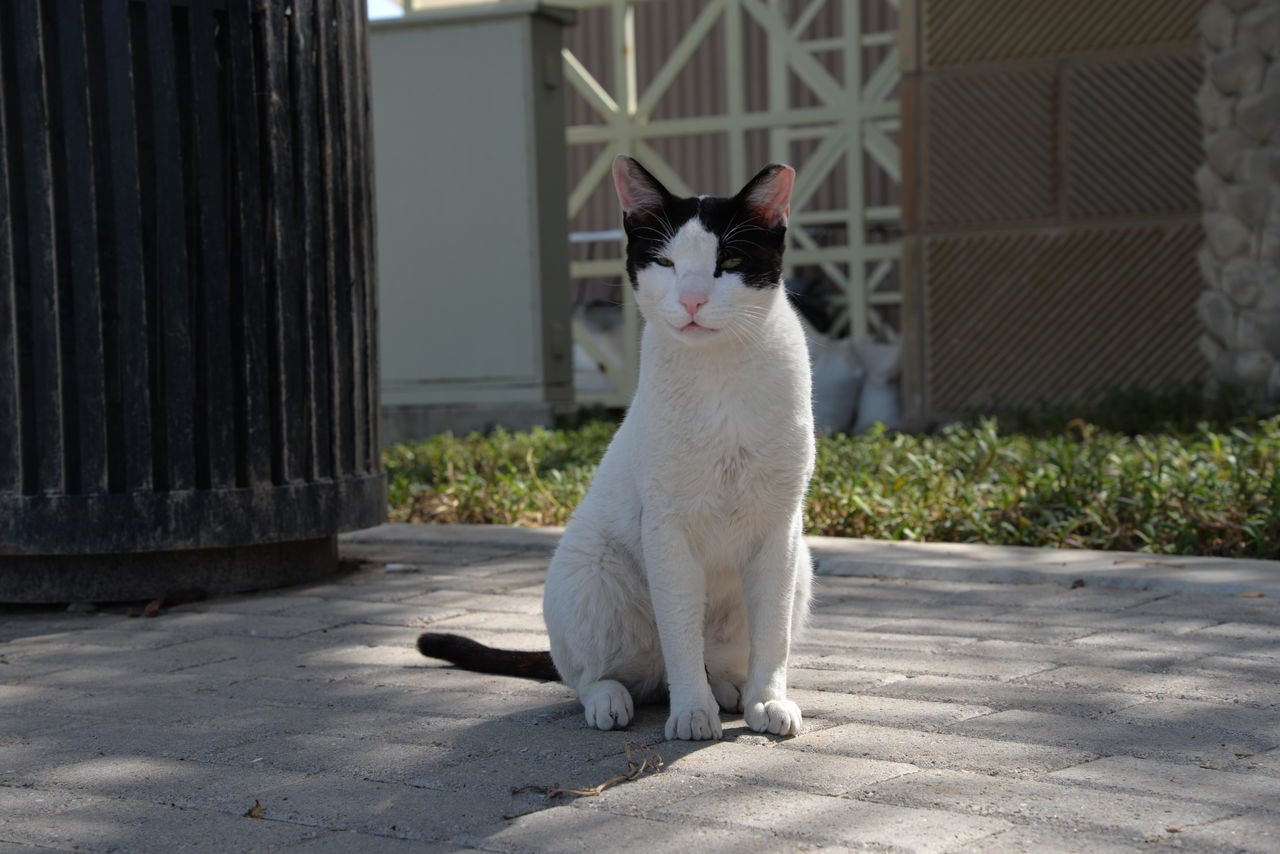 animal themes, one animal, pets, domestic cat, domestic animals, mammal, white color, feline, day, outdoors, sitting, no people, full length, nature