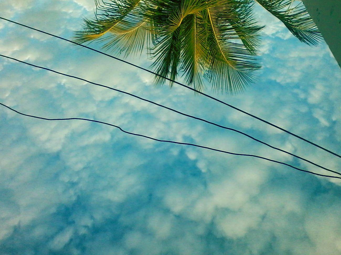 Ceu Nublado Skylovers CeuPerfeito Ceumaravilhoso Skyscrapers Sky And Trees CeuAzul Skyline Ceu Liindo! Ceudays Sky Collection