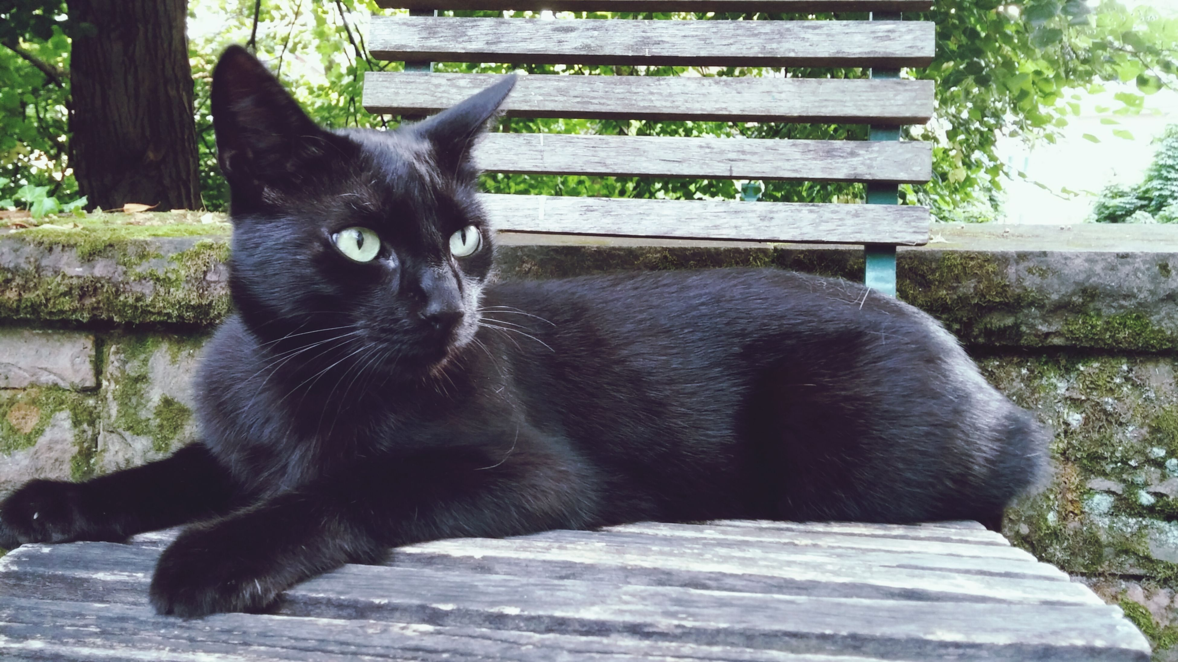 pets, mammal, animal themes, domestic animals, one animal, relaxation, black color, sitting, domestic cat, dog, cat, day, outdoors, looking away, no people, feline, sunlight, close-up, wood - material