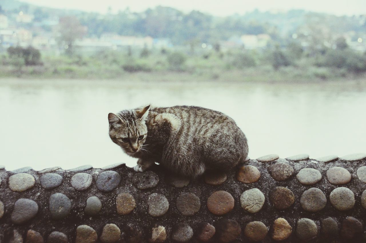 Cat Cat♡ Pregnant Cat Cats Of EyeEm Domestic Cat Pets Eyeemphoto Eye4photography  Check This Out