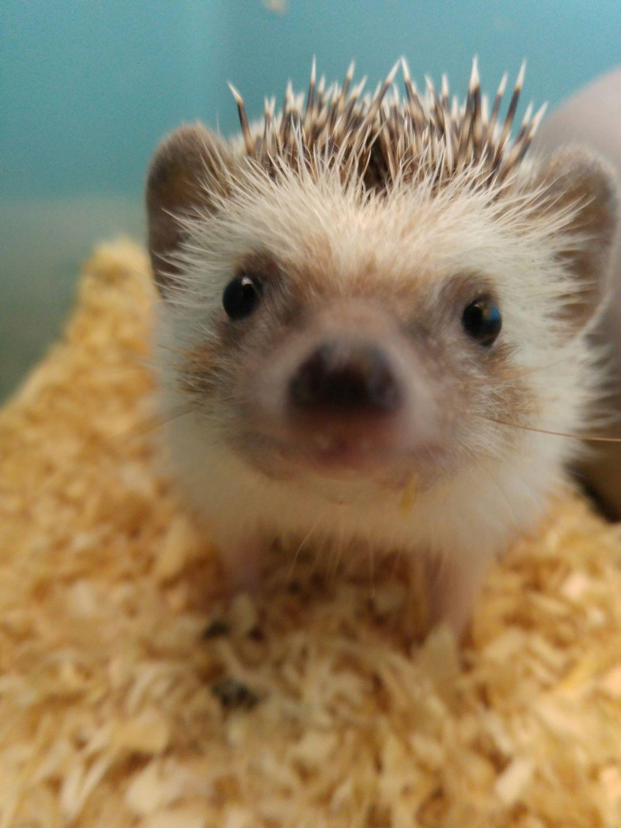 Capture The Moment Hedgehog
