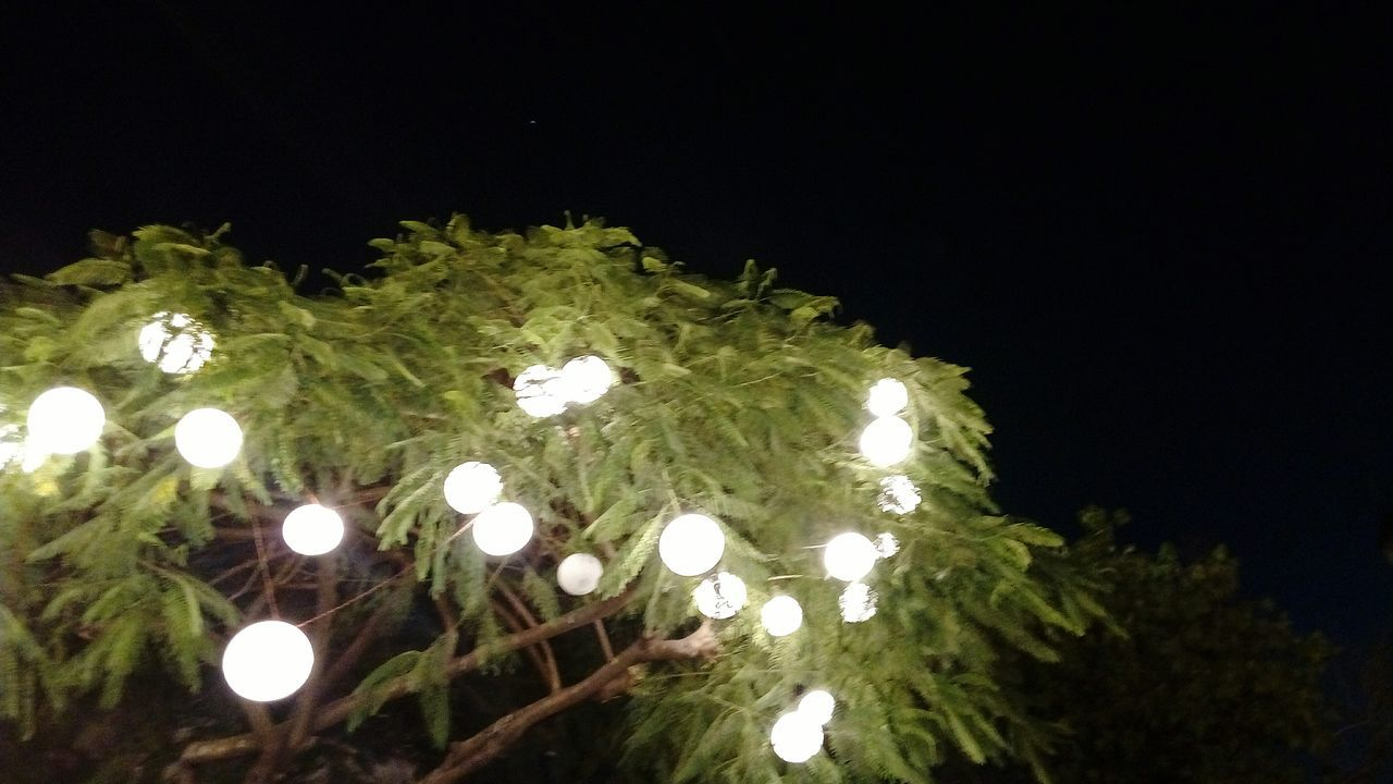 No People Low Angle View Illuminated Outdoors Nature Night Architecture Nature Famous Tourist Attractions Lighting Equipment Tourism City Travel Kalaghoda🐴 Kalaghodaartfestival Low Angle View