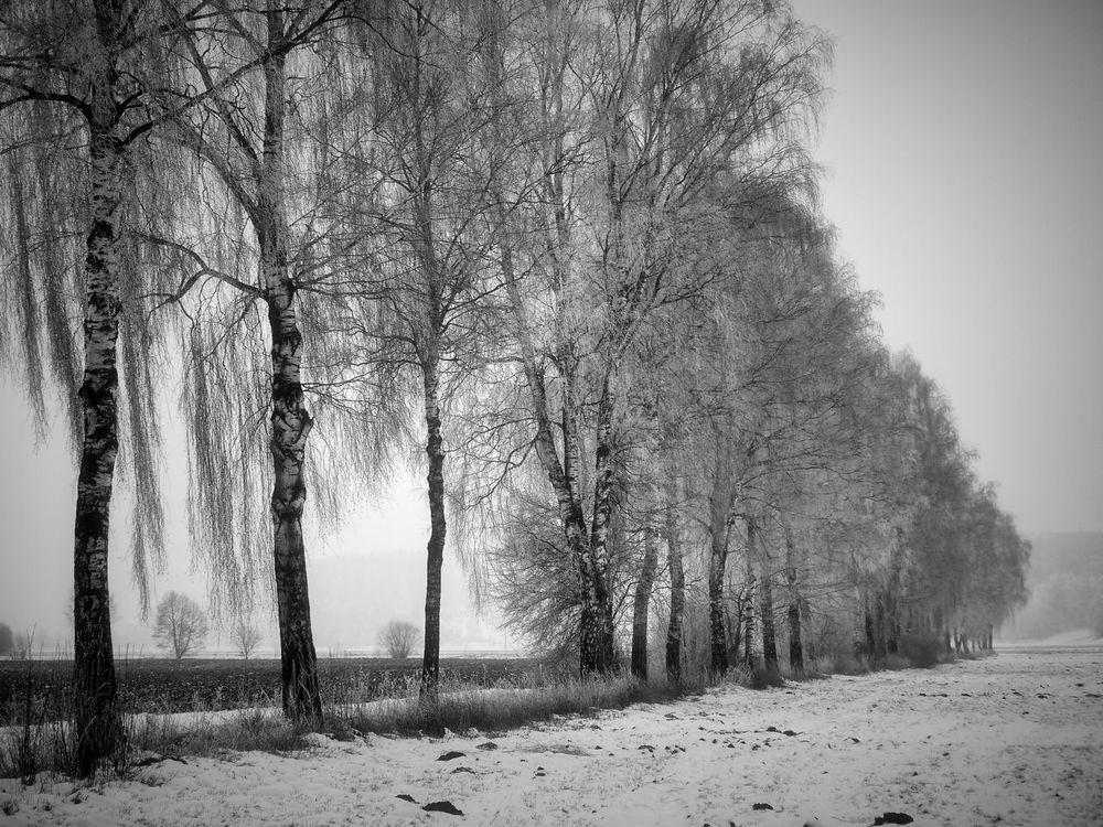 Birkenallee im Winter Allee Blackandwhite Landschaft Nature Outdoors Reif Schwabenland Snow ❄ Tree Winterlandscape Wintertime