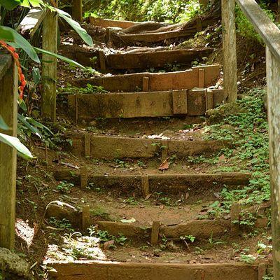 Bushments Trails Caribbean_beautiful_landscapes Westindies_landscape Grenada Islandlivity Ig_caribbean Nature
