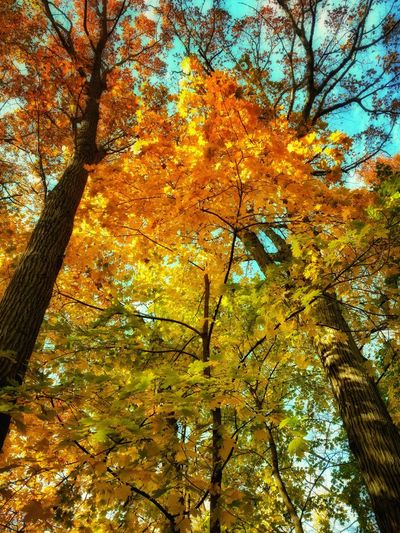 Nature No People Tree Low Angle View Leaf Backgrounds Beauty In Nature Autumn Full Frame Growth Change Yellow Day Outdoors Animal Themes Close-up Branch Scenics Sky Seasons Fall Leaves Changing Leaves Autumn Autumn Colors EyeEm Best Shots