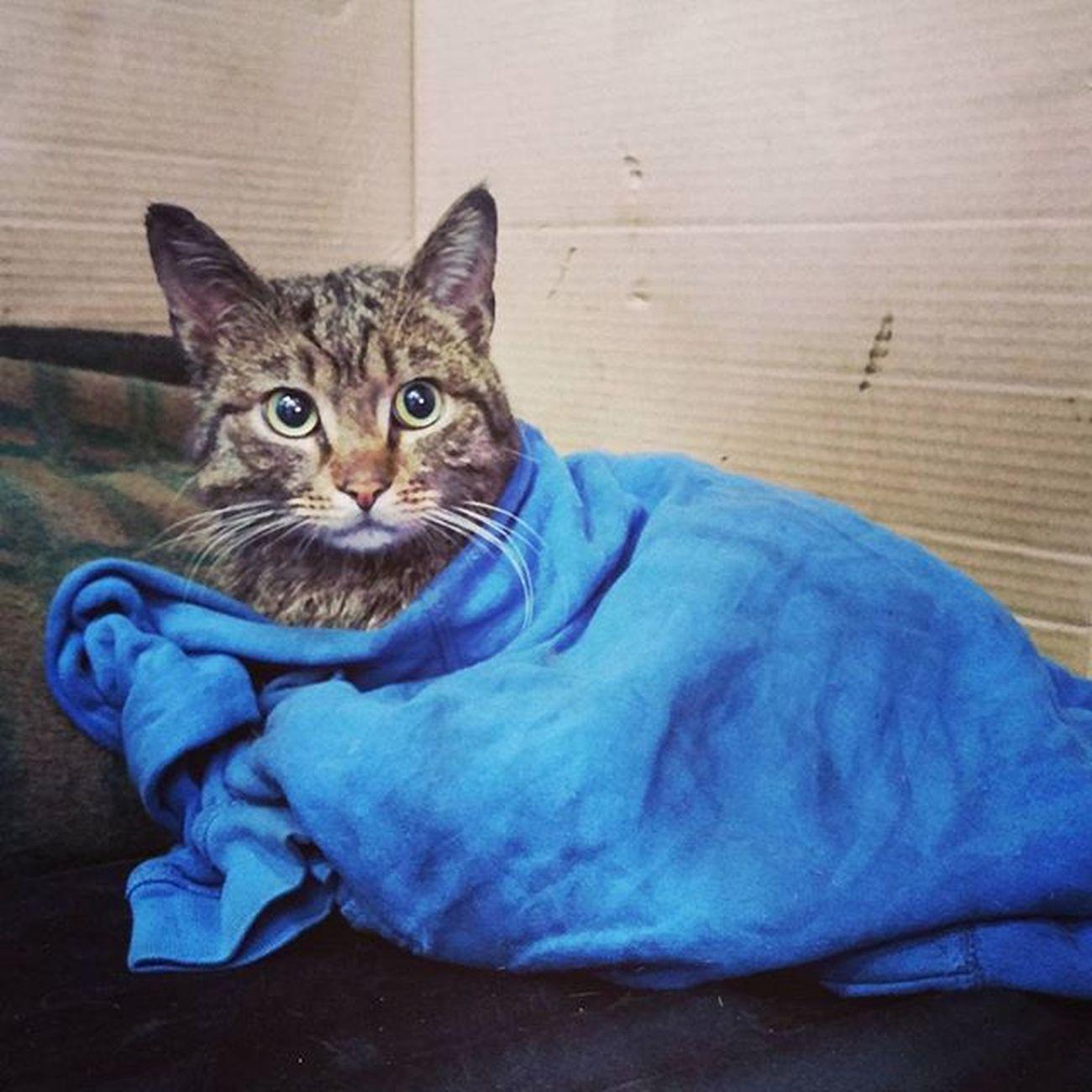 котэ после душа Cat Cats мимишность