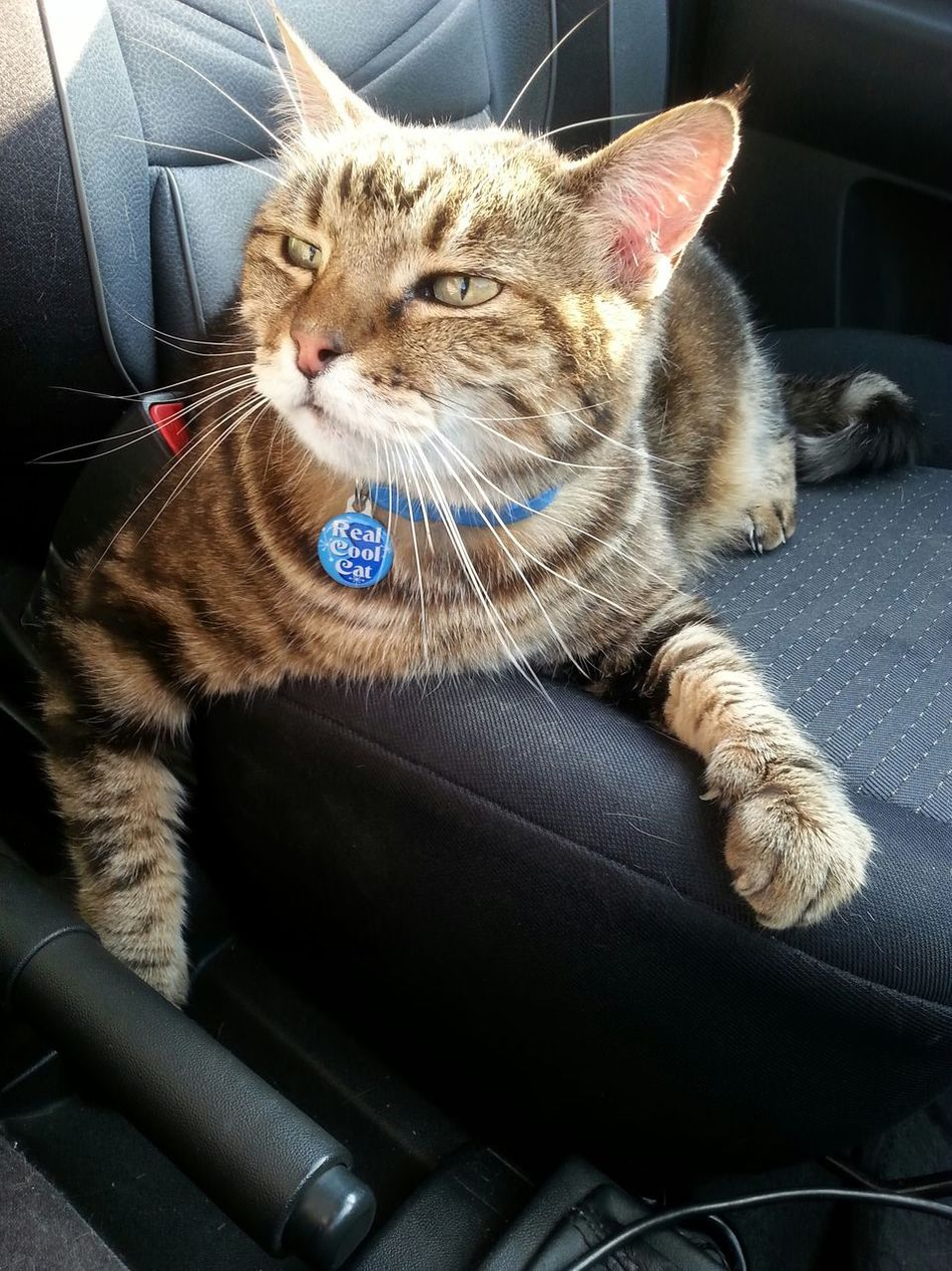 On the way to the vet Chilling Out Cat Chillin Like A Villain Cool Cats  Like A Boss Boss Cute Cats