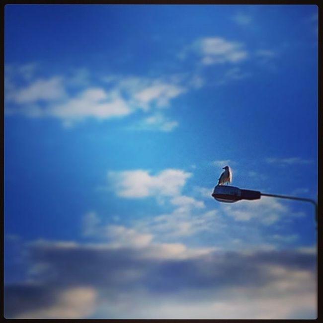 Lonely watcher Summerevening Kesäilta Seagull Lokki