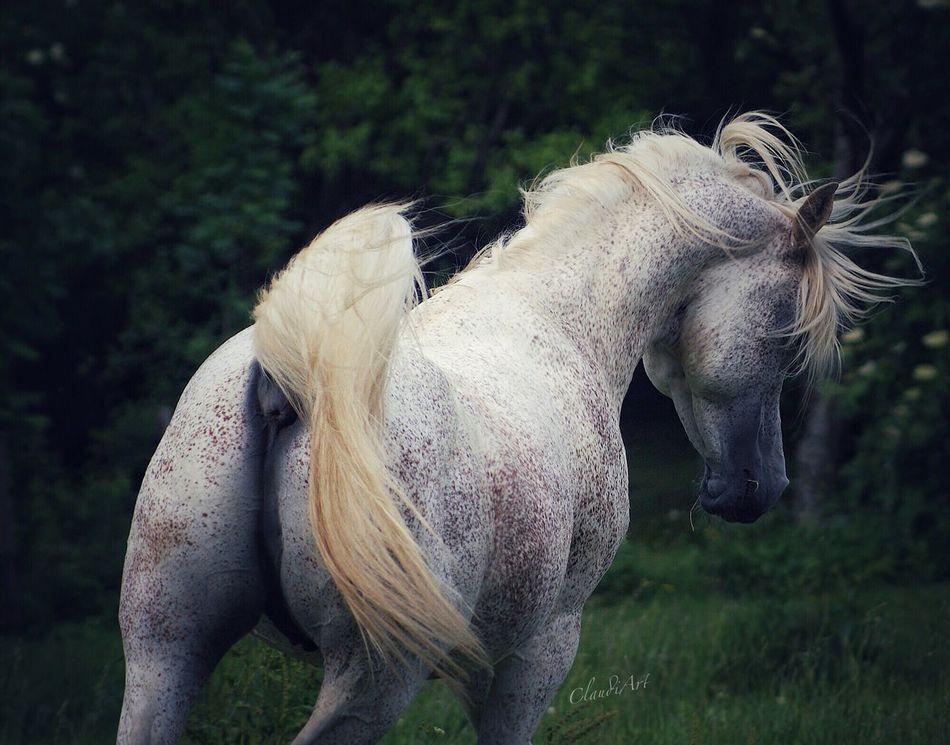 Mahrous (straight Egyptian Stallion) First Eyeem Photo