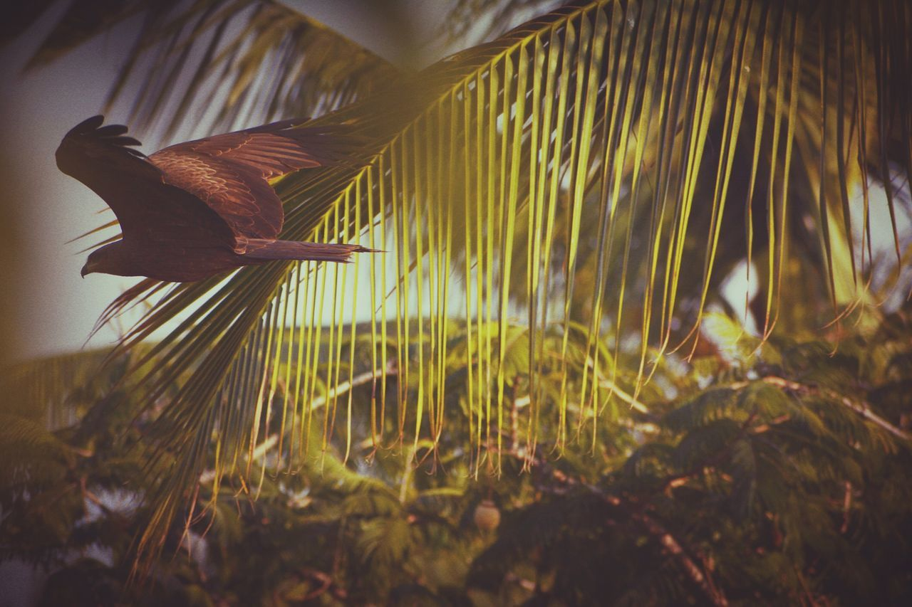 growth, nature, no people, day, close-up, outdoors, animal themes, bird