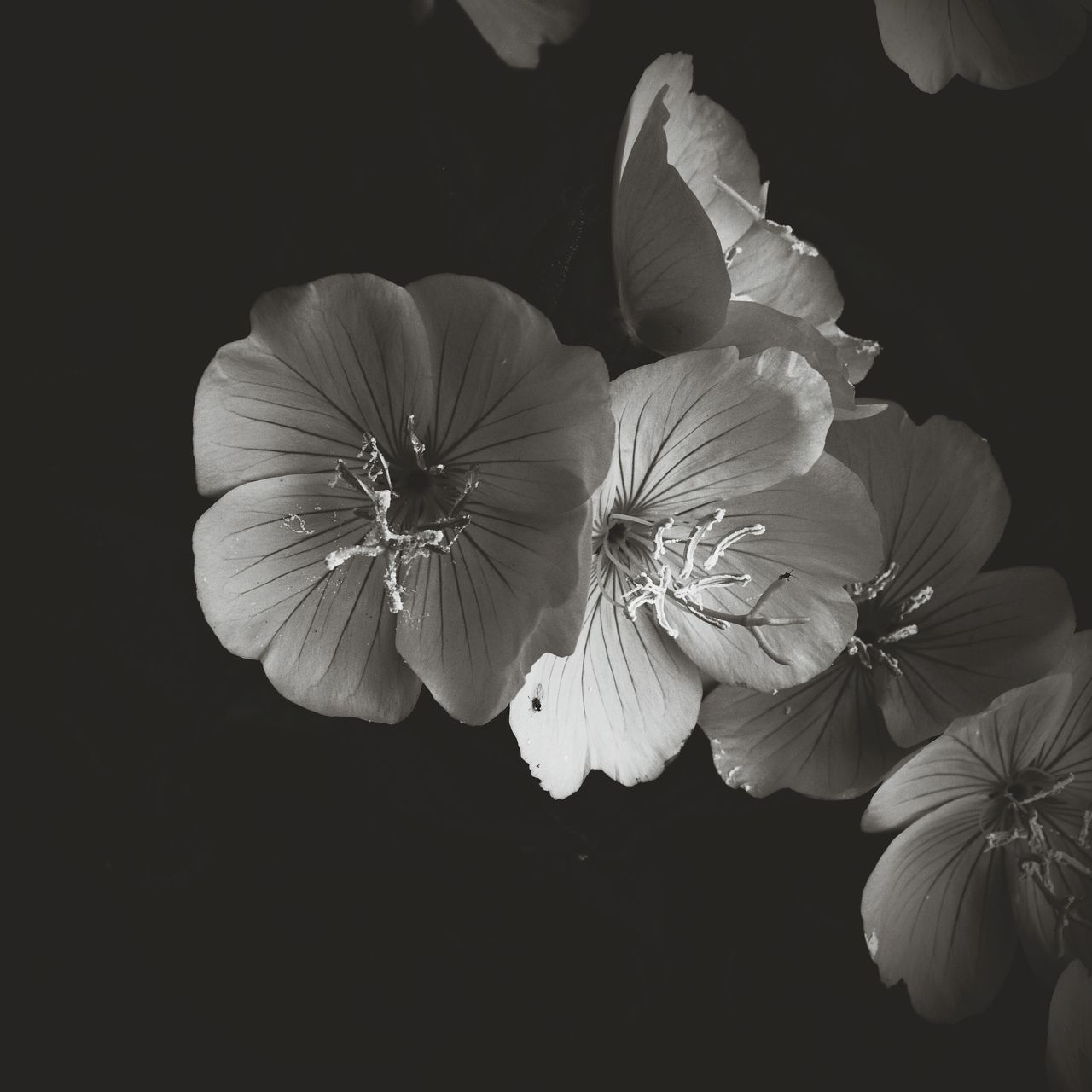 Taking Photos Check This Out Black And White Photography Black And White From My Point Of View Eye4photography  EyeEm Gallery Black And White Collection  Flower Porn Getting Inspired Black And White Flower Collection Fine Art Photography