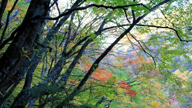 Autumn Autumn Colors Colorful Fall Gorgeous Hiking Mountain Nature Nature_collection Yamanashi もみじ もみじ市 尾白川渓谷 白州 紅葉 紅葉狩り
