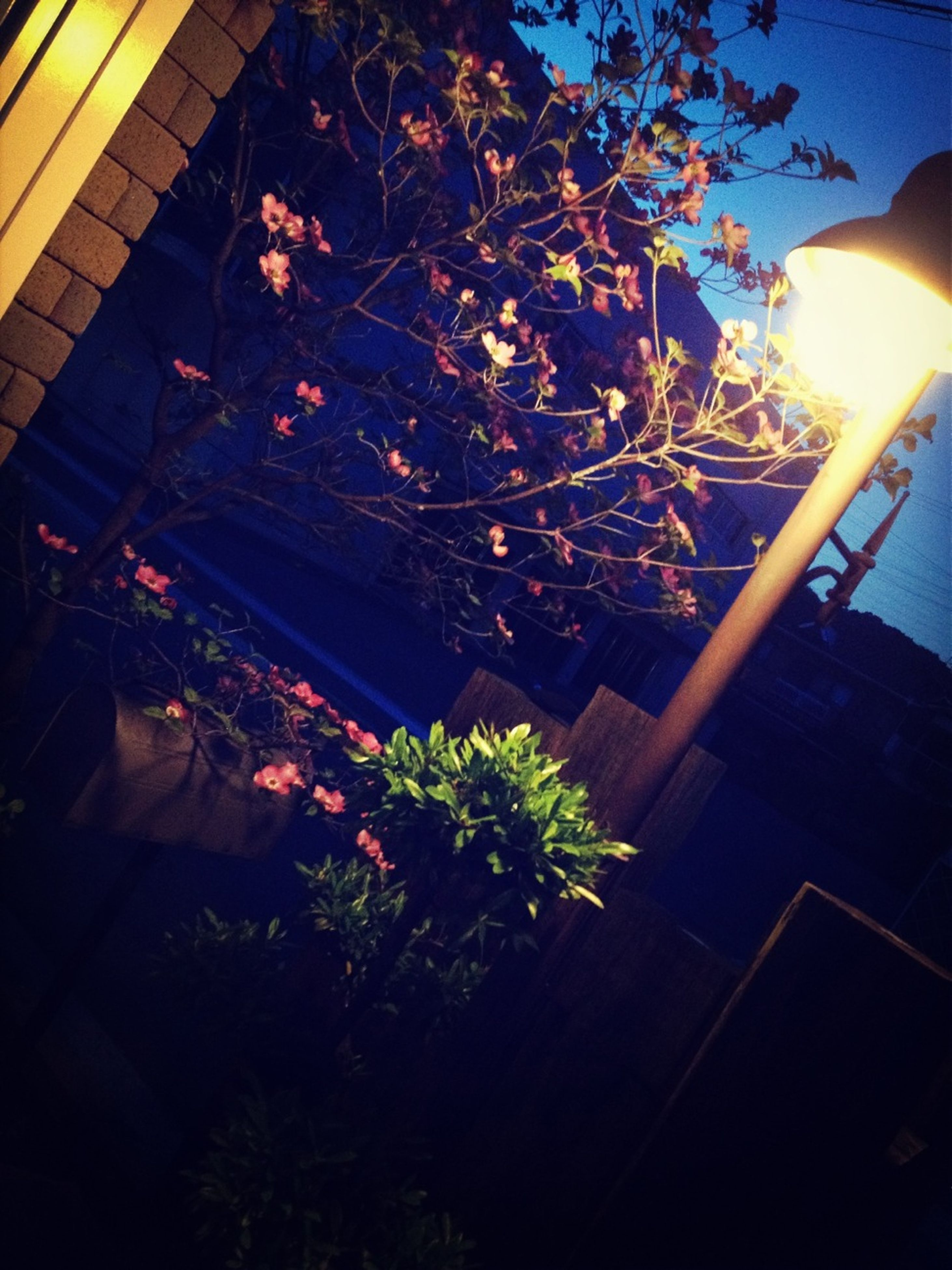 tree, sunlight, growth, plant, built structure, sunbeam, front or back yard, flower, architecture, building exterior, house, night, shadow, nature, lens flare, illuminated, outdoors, branch, high angle view