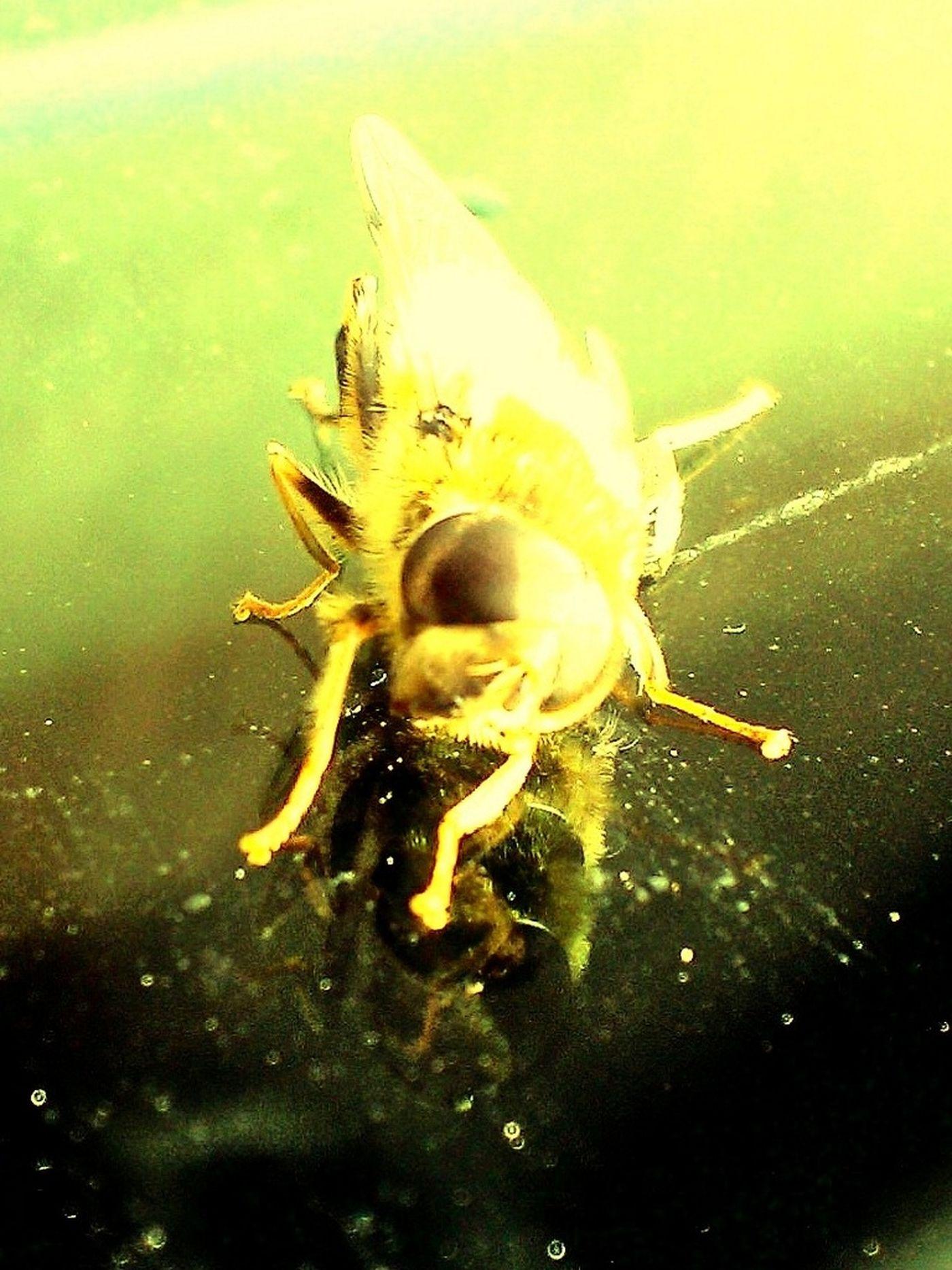 Bee On Car